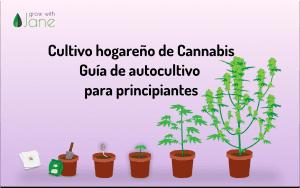 Cultivo de cannabis en casa: guía para principiantes