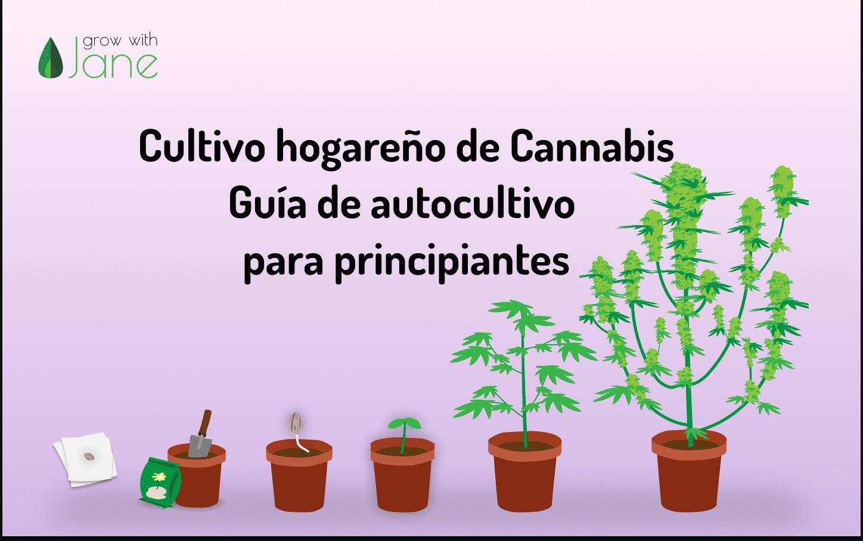 guía autocultivo cannabis principiante