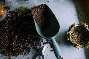 Preparing soil Cannabis crop