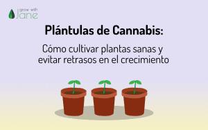 Plántulas de Cannabis – Cómo evitar retrasos en el crecimiento