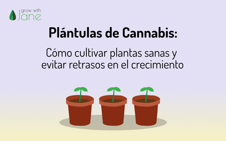 plántula cannabis evitar retraso crecimiento