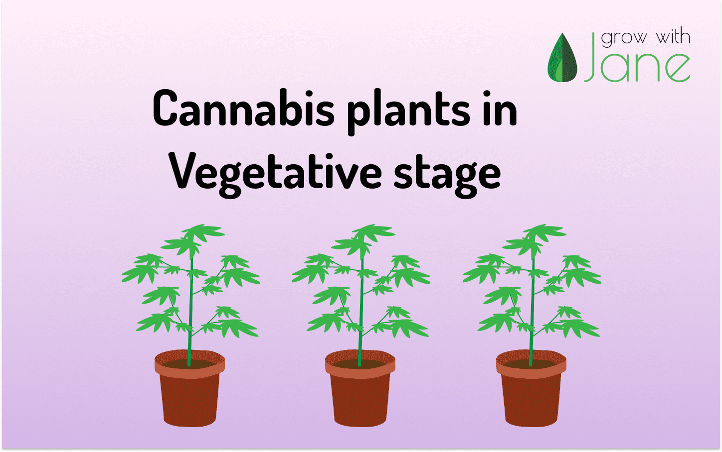 Cannabis plant in vegetative stage