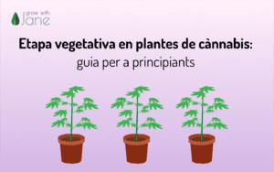 Etapa vegetativa en plantes de cànnabis: guia per a principiants