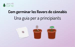 Com germinar les llavors de cànnabis: una guia per a principiants