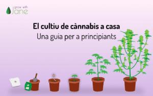 El cultiu de cànnabis a casa: una guia per a principiants