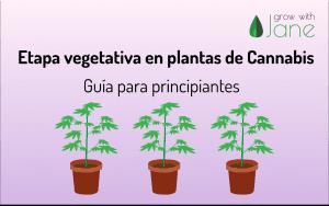 Etapa vegetativa de las plantas de Cannabis: una guía para principiantes