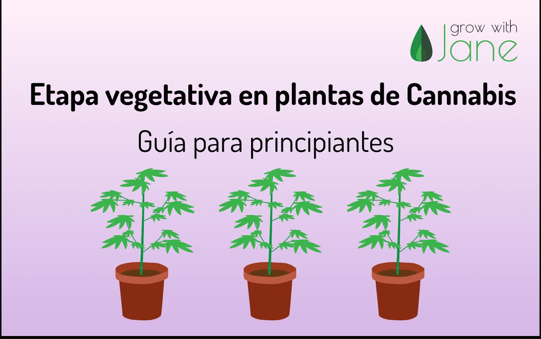 cannabis etapa vegetativa guia principiantes