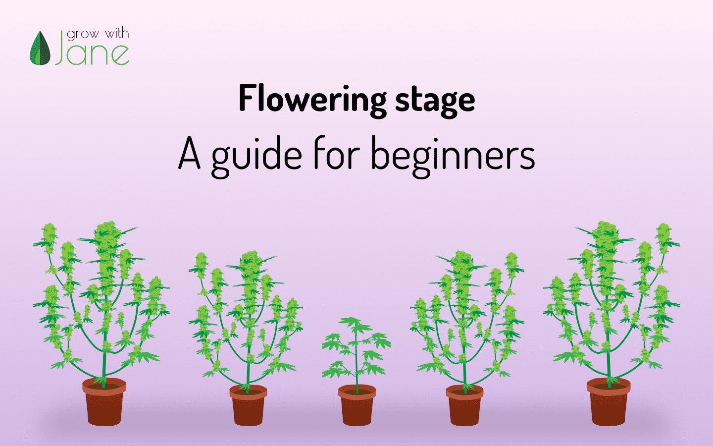 Flowering Stage - A guide for beginners