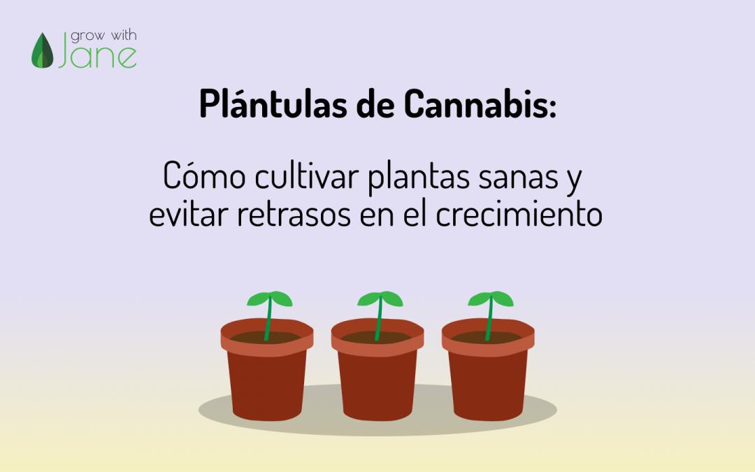Plántulas de Cannabis: Cómo cultivar plantas sanas y evitar retrasos en el crecimiento