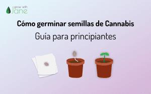 Cómo germinar semillas de cannabis: una guía para principiantes
