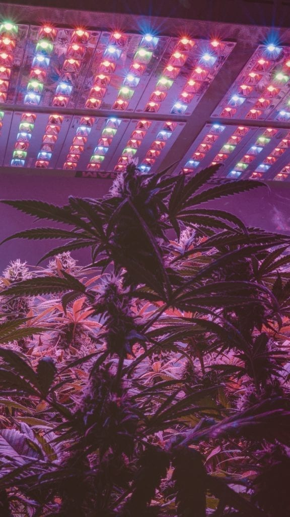 led-panel-cannabis-growing