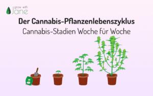 Der Cannabis-Pflanzenlebenszyklus – Cannabis-Stadien Woche für Woche