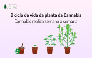 O ciclo de vida da planta da Cannabis – Cannabis realiza semana a semana