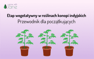 Etap wegetatywny w roślinach konopi indyjskich: przewodnik dla początkujących