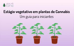 Estágio vegetativo em plantas de Cannabis: um guia para iniciantes