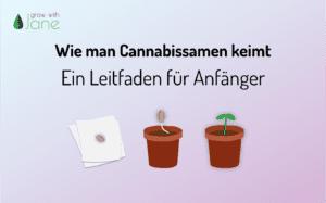 Wie man Cannabissamen keimt: ein Leitfaden für Anfänger