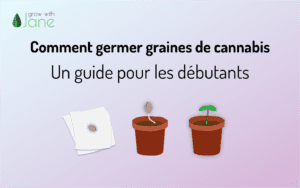 Comment germer graines de cannabis: un guide pour les débutants
