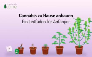 Cannabis zu Hause anbauen: ein Leitfaden für Anfänger