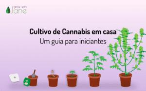 Cultivo de Cannabis em casa: um guia para iniciantes