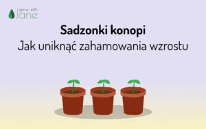 Sadzonki konopi – Jak uniknąć zahamowania wzrostu