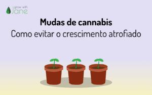 Mudas de cannabis – Como evitar o crescimento atrofiado