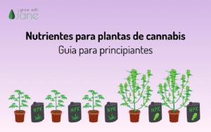 Nutrientes para las plantas de cannabis: guía para principiantes