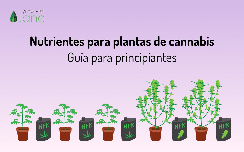 nutrientes para plantas de cannabis