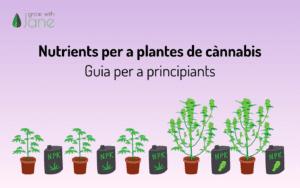 Nutrients per a les plantes de cànnabis: una guia per a principiants