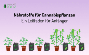 Nährstoffe für Cannabispflanzen: ein Leitfaden für Anfänger