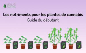 Les nutriments pour les plantes de cannabis : un guide pour les débutants