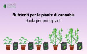 Nutrienti per le piante di Cannabis: una guida per i principianti
