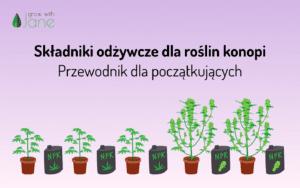 Składniki odżywcze dla roślin konopi indyjskich: przewodnik dla początkujących