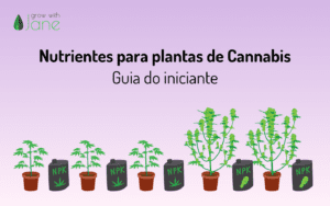 Nutrientes para plantas de Cannabis: um guia para iniciantes